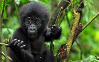 10 Days Best of Uganda and Rwanda