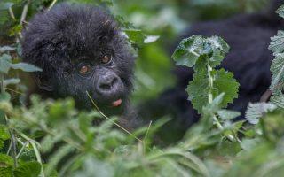 15 Days Grand Uganda Safari