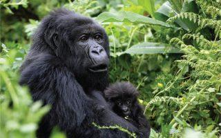 4 Days Gorilla and Wildlife Safari Uganda