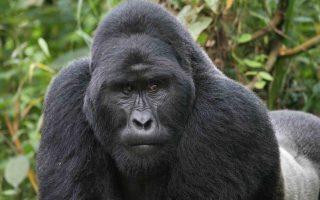 4 Days Uganda Gorilla Trekking & Wildlife Safari