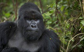 5 Days Rwanda Gorilla Trek