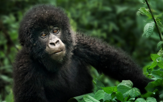 5 Days Uganda Chimpanzee tracking