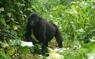 6 Days Uganda Gorillas