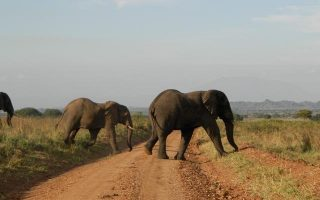 7 Days Murchison Falls and Kidepo Jungle Experience