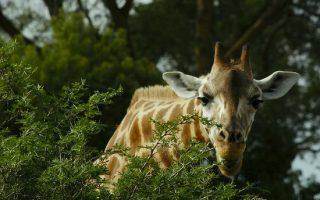 8 Days Gorilla and Wilderness Safari