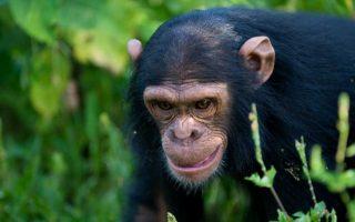 3 Days Ngamba Chimpanzee Sanctuary Tour