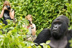 trekking with gorillas in Rwanda
