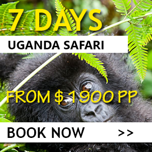 best of Uganda safari in 7 days